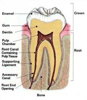 toothlabel